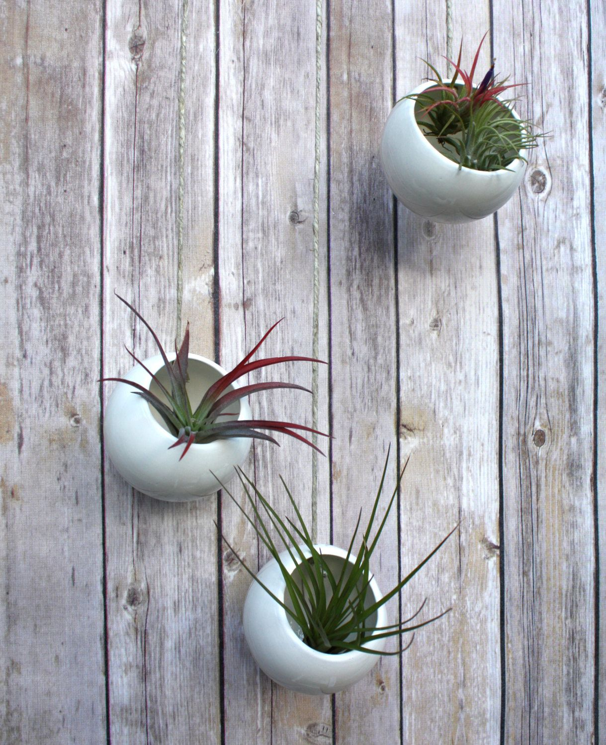 Large Wall Mounted Planters How To Care For The Lovely Air Plants That Adorn Your Home