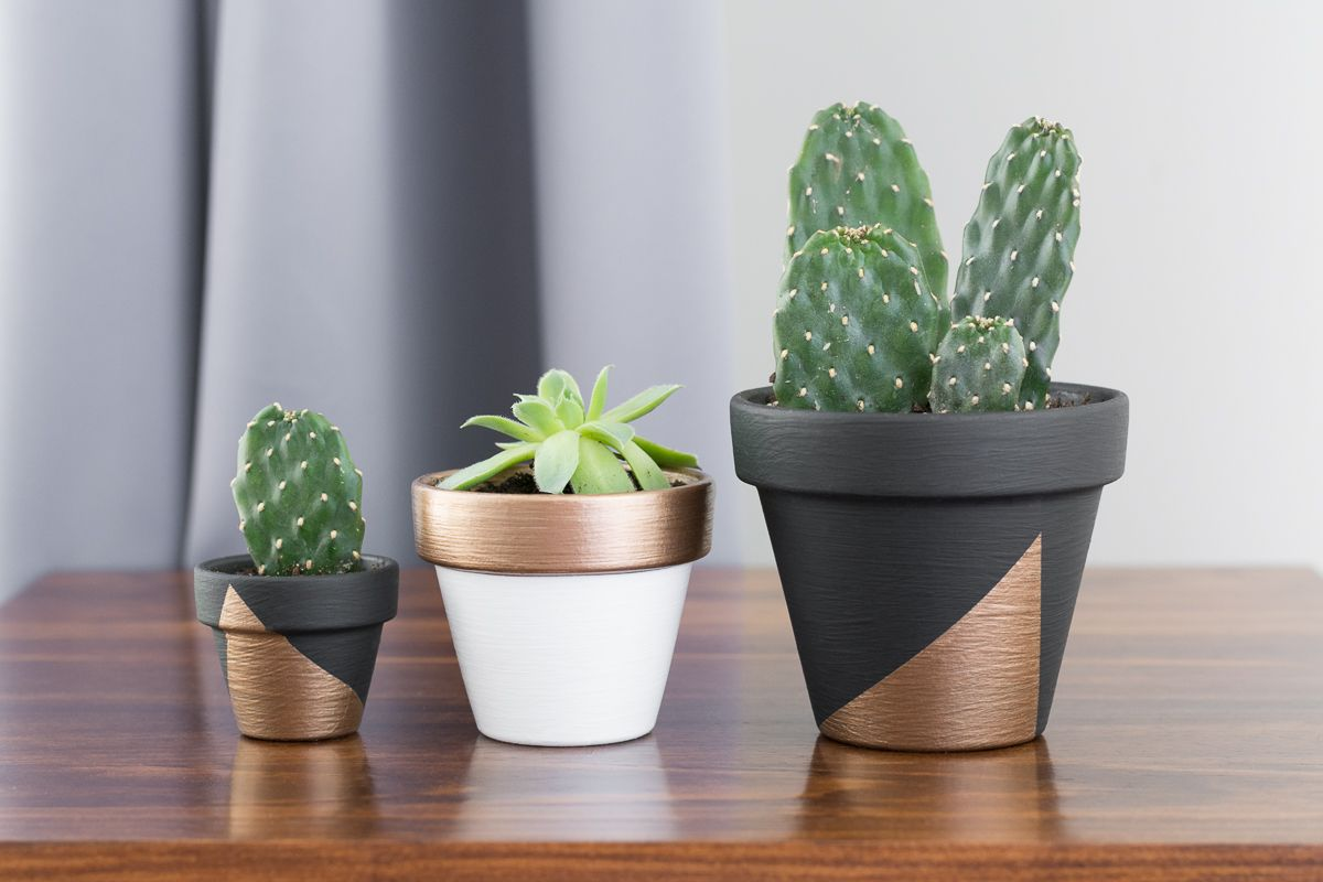 Mini Plant Pots Bulk Modern Pots For Indoor Plants Beautiful Sansevieria One