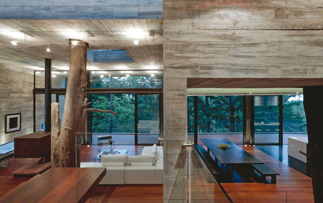 Concrete House Interior Houses That Save Trees By Wrapping Themselves Around Them