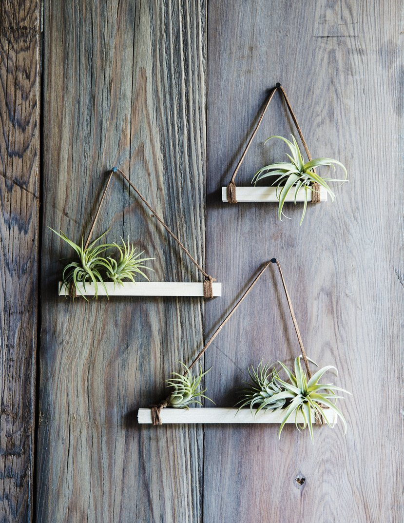 Air Plant Wall Holder 12 Diys To Get Air Plants On Your Wall