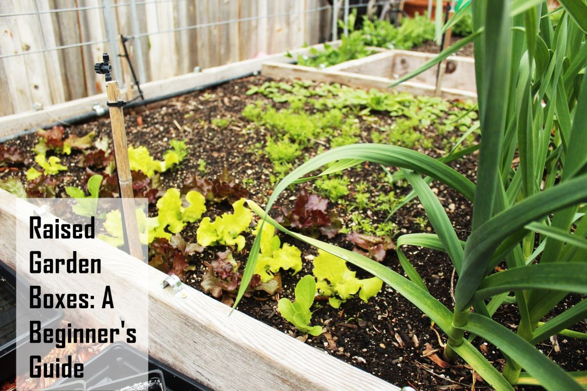 Raised Garden Beds 101 Tips On Planning Building Using