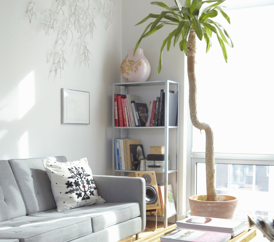 Feng Shui Bad Plants Feng Shui And Your Living Room Sofa