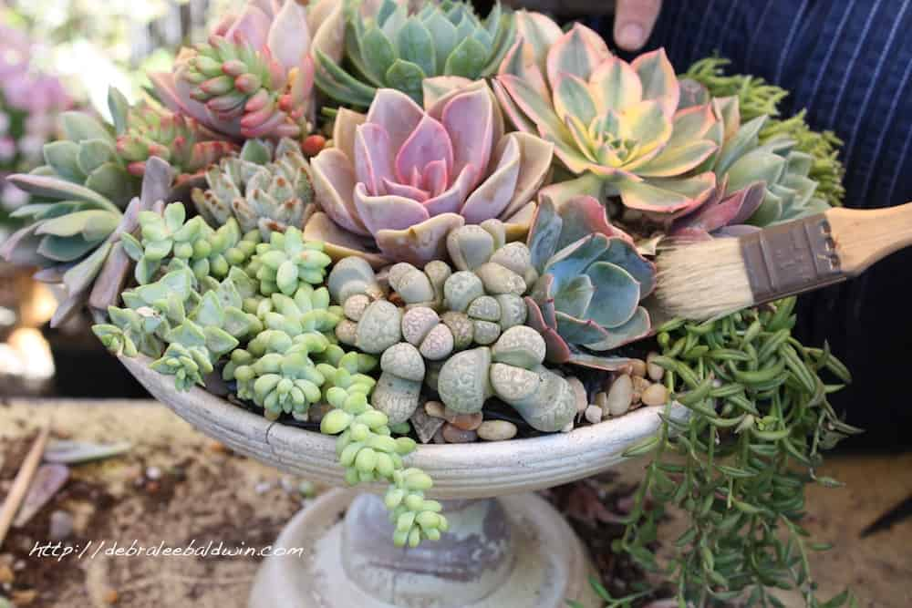 Fall Flowers And Pumpkins Wallpaper Fill Your Home With Glamorous Simple Diy Succulent