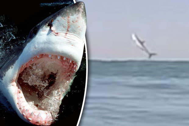 Florida Beach Fall Wallpaper Shark Leaps From Sea In Front Of Stunned Surfers In