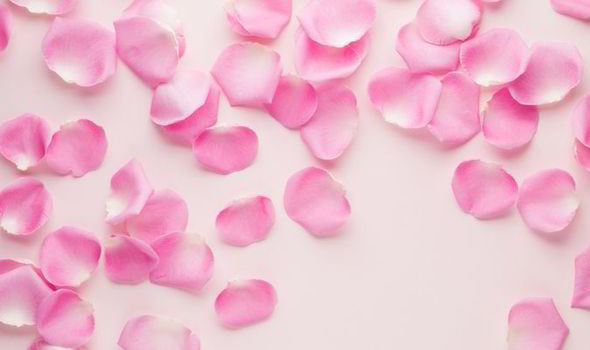 Cute Rose Wallpaper William Hartston S Top 10 Facts About Colour Pink
