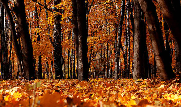 Fall Heart Leaves Background Wallpaper Top 10 Facts About Autumn Express Co Uk