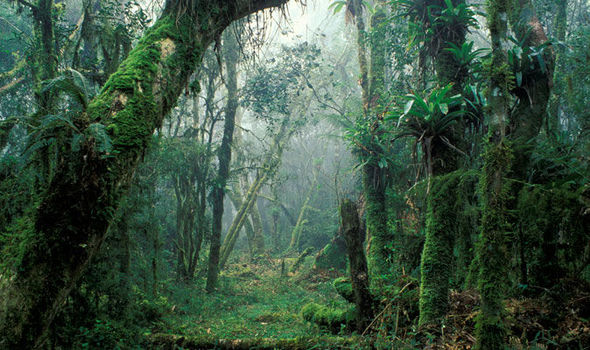 National Geographic Fall Wallpaper Research Has Found That Trees In The Amazon Are Under