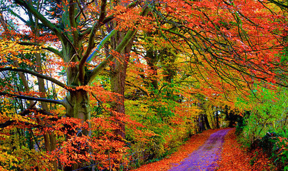 Fall Cape Cod Wallpaper Wet Summer Means Glorious Display Of Autumn Leaves