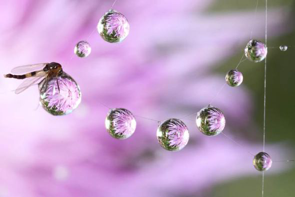 Rain Drop Wallpaper Hd Photographer Captures Insects Resting On Raindrops In