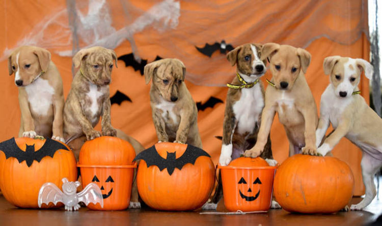 Free Fall Wallpaper Apps Dogs Trust Are Looking New Homes For These Pumpkin Patch