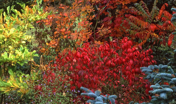 American Wallpaper Fall River Six Of The Best Shrubs For Autumn Colour Garden Life