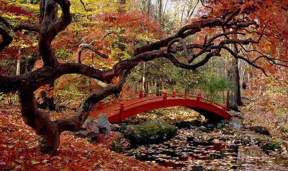 Fall Garden Wallpaper How To Choose Top Trees For Autumn Colour Express Co Uk