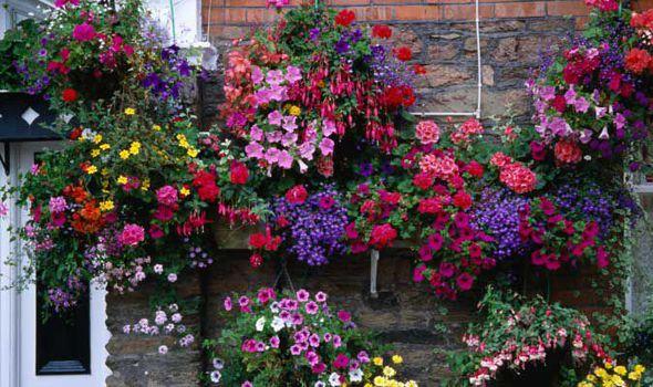 Alan Titchmarsh On Hanging Flower Baskets Expresscouk