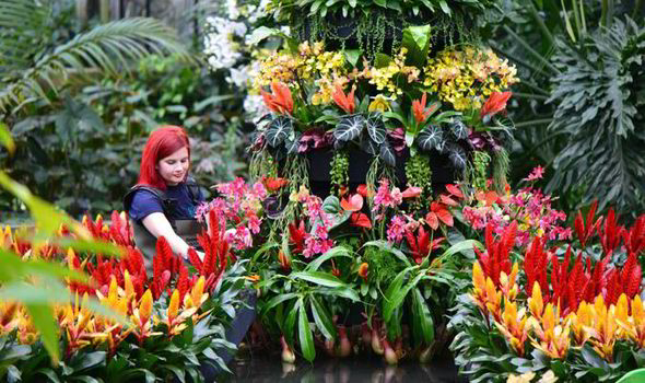 Exotic Cars Fall Wallpaper Out Amp About Kew Gardens Tropical Flower Extravaganza