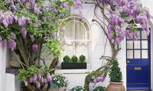 Wisteria Falls Wallpaper Alan Titchmarsh The Only Way Is Up Garden Life