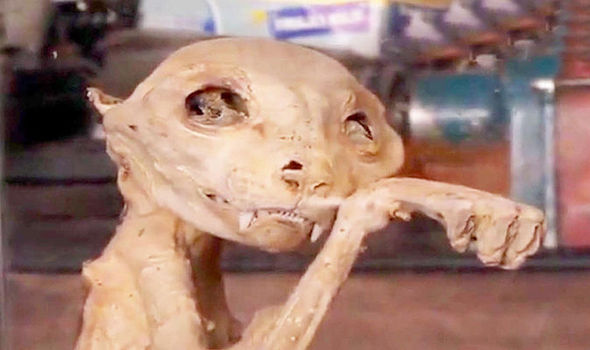 Mummified Remains Of Extinct Monster Cat Discovered But