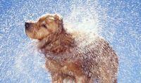 Wet dog is voted worst car smell | Weird | News | Express ...