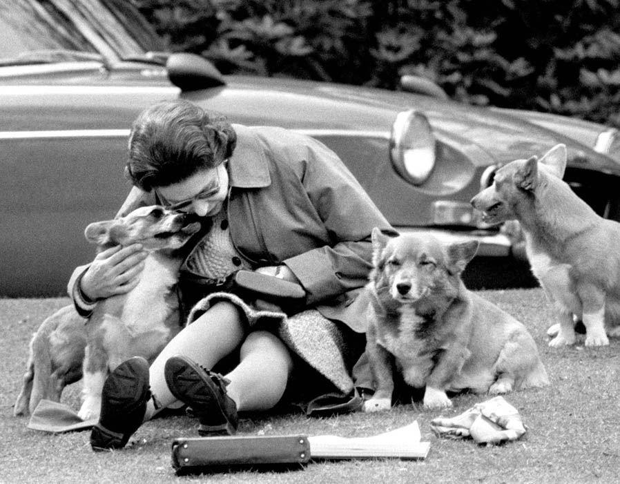 Image For Bedlington Terrier Puppies