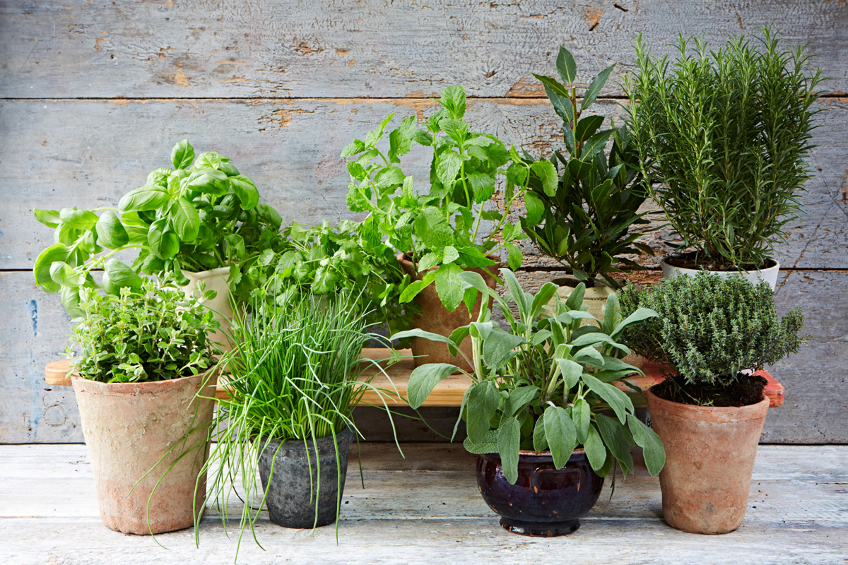 Herb Pots Kitchen The Ultimate Guide To Growing Herbs Jamie Oliver Features
