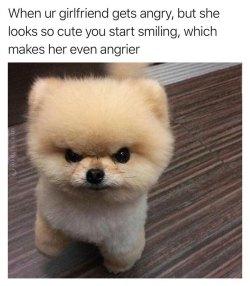 Chic Animal Memes Ny Animals Ny Memes Angry Dog Baby Joke Meme Dog Dad Joke Meme