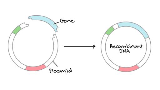 dna diagram gene