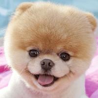 puppy_logo