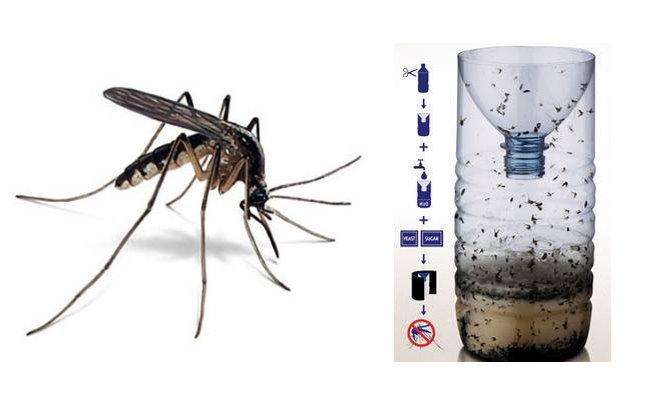 保特瓶抓蚊子