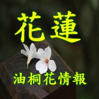 花蓮油桐花季節觀賞景點介紹_sp