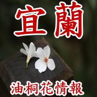 宜蘭油桐花季節景點_SP