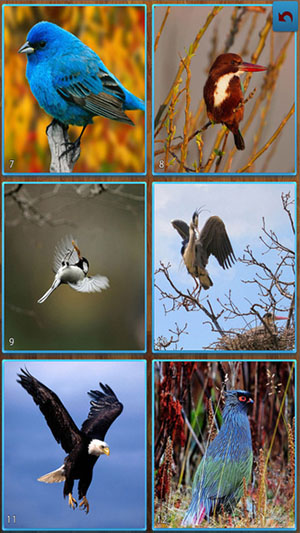 Birds Jigsaw Puzzles-1