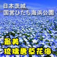国営ひたち海浜公園-ps