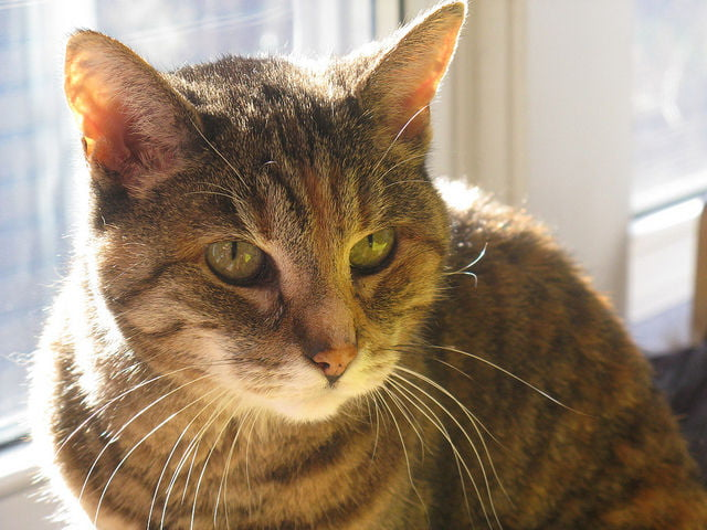 How To Answer How Old Is My Cat? - Care