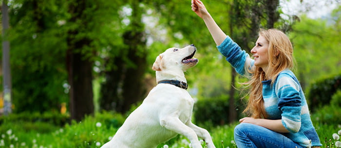10 Things To Look For In A Pet Sitter - Care - pet babysitter