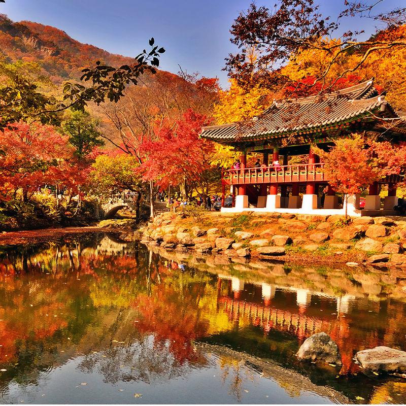 Nature Wallpaper Hd Phone Fall 2018 Korea Fall Foliage Naejangsan Autumn Leaves 1 Day