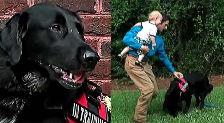 Mom Had No Idea She Hired A Monster, Until The Family Dog Started