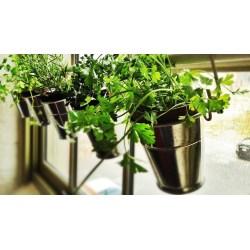 Small Crop Of Creating An Indoor Garden