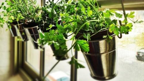 Medium Of Creating An Indoor Garden