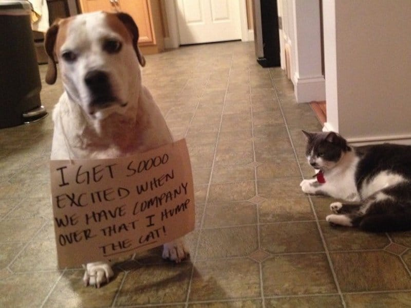 Super Cute Little Baby Wallpapers 20 Dog Shaming Photos That Will Have You Cracking Up