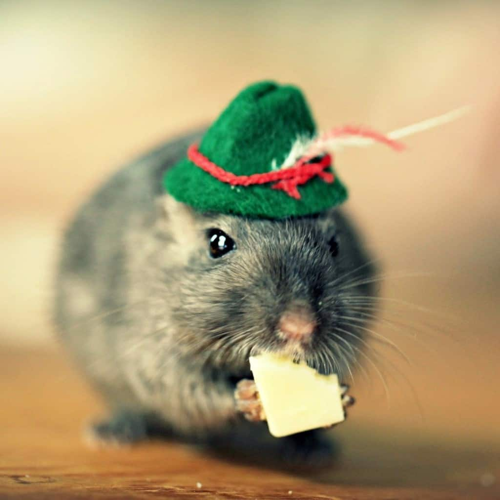 Cute One Piece Wallpaper Hd 20 Pictures Of Animals In Hats To Brighten Up Your Day