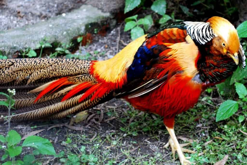 Bird Of Paradise Hd Wallpaper 10 Of The Most Colorful Animals In Existence