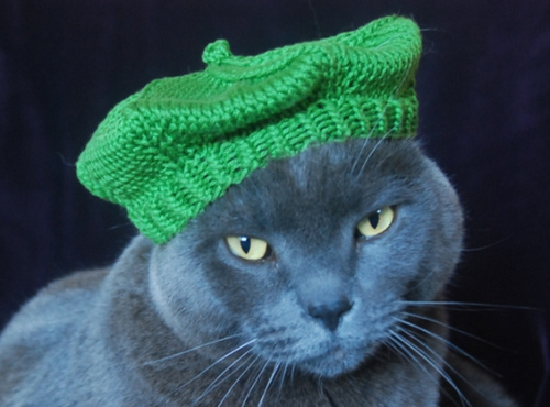CatBeret.jpg