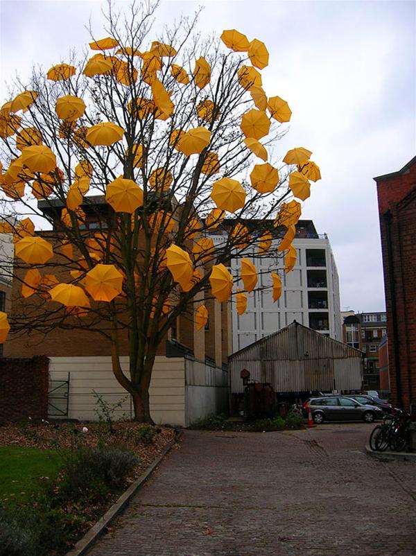 umbrellatree.jpg