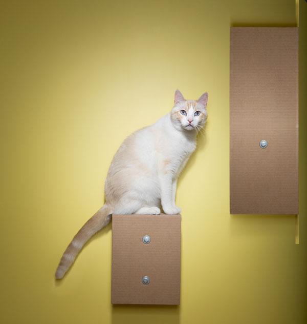 catnip-castle-opener.jpg