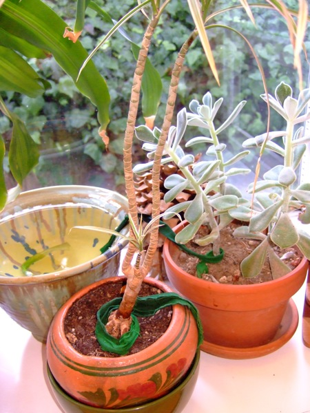 wickingplants_step6.jpg