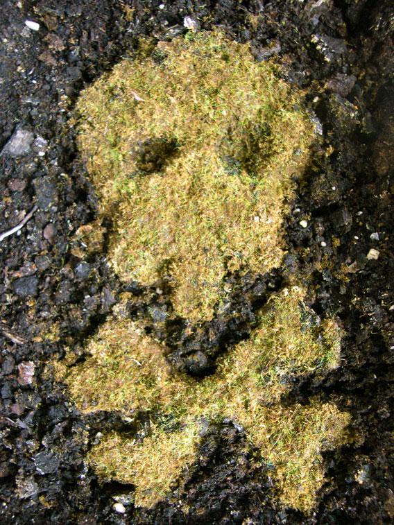 growing_skull3.jpg