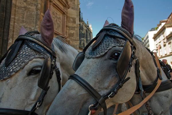 horsebonnetflyfromsam.jpg