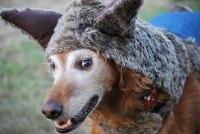 Big Bad Wolf Dog Costume   Make: