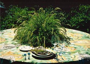 Grasssetariapanicum314.jpg