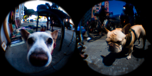fisheye dog shots.jpg