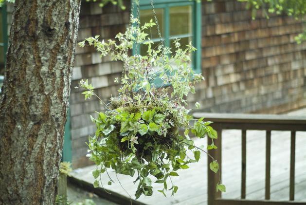 hanging_planter_0016.jpg